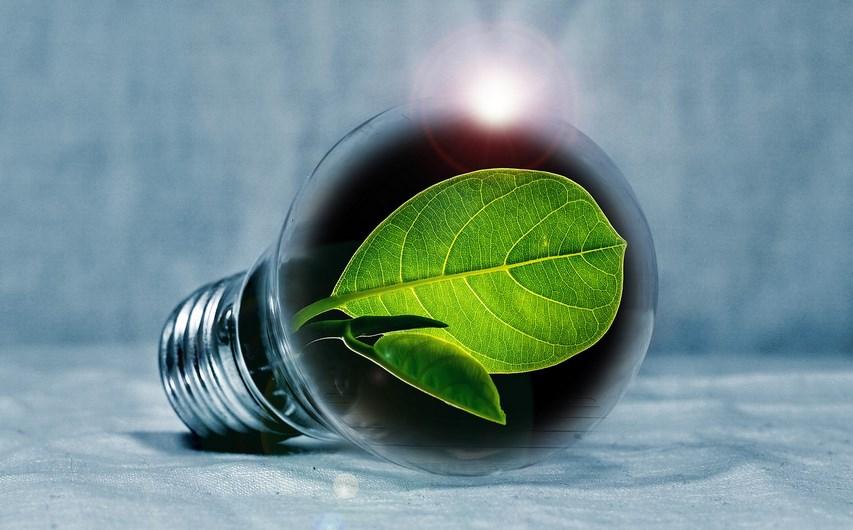 lampadina ecologica